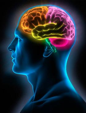 Resultado de imagem para foto de neuropsicologia
